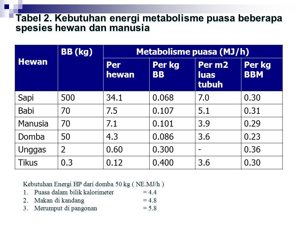 Metabolisme puasa (MJ/h)