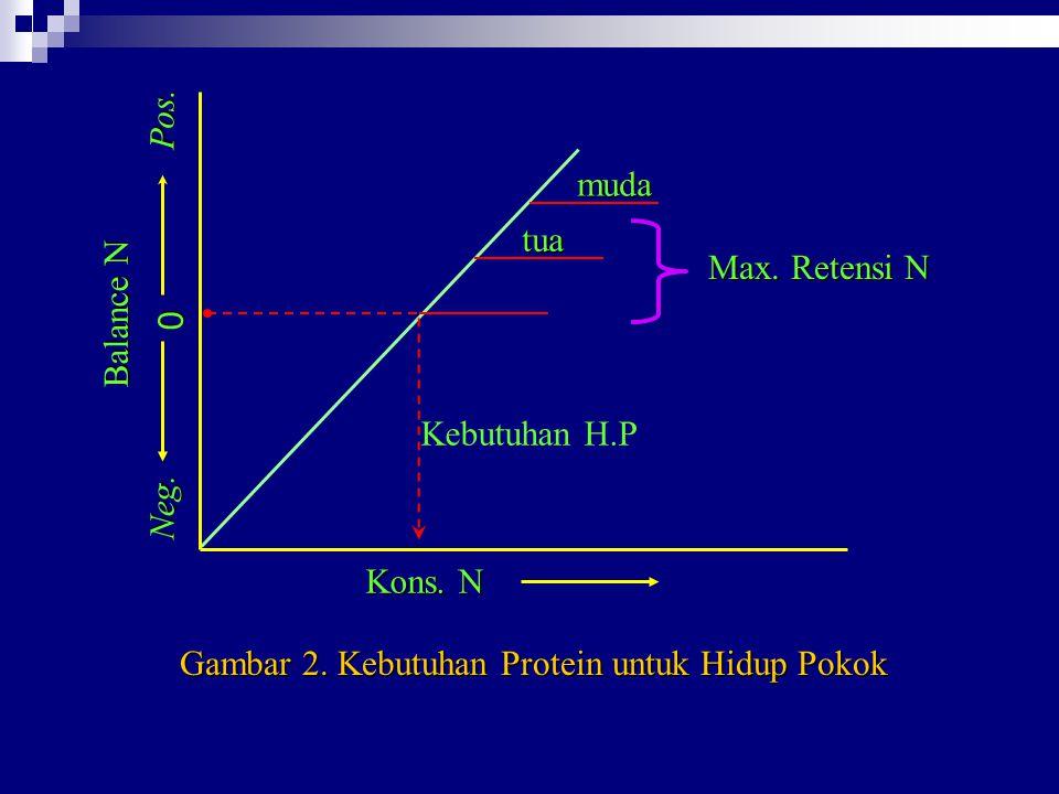 Gambar 2. Kebutuhan Protein untuk Hidup Pokok