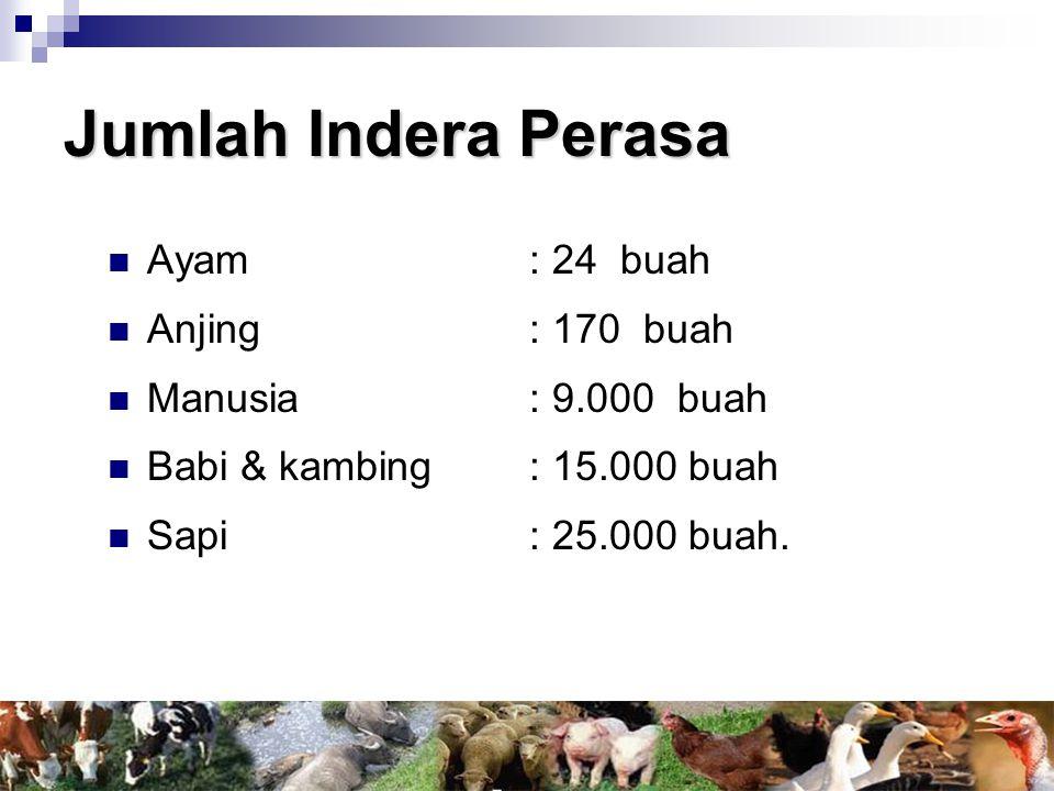 Jumlah Indera Perasa Ayam : 24 buah Anjing : 170 buah