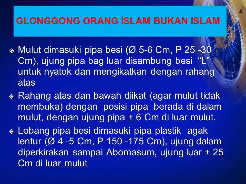 GLONGGONG ORANG ISLAM BUKAN ISLAM