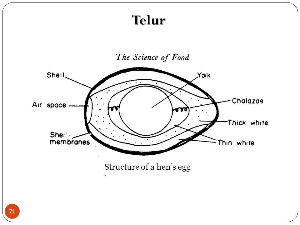 Structure of a hen's egg
