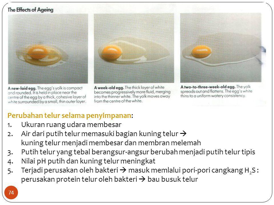 Perubahan telur selama penyimpanan: