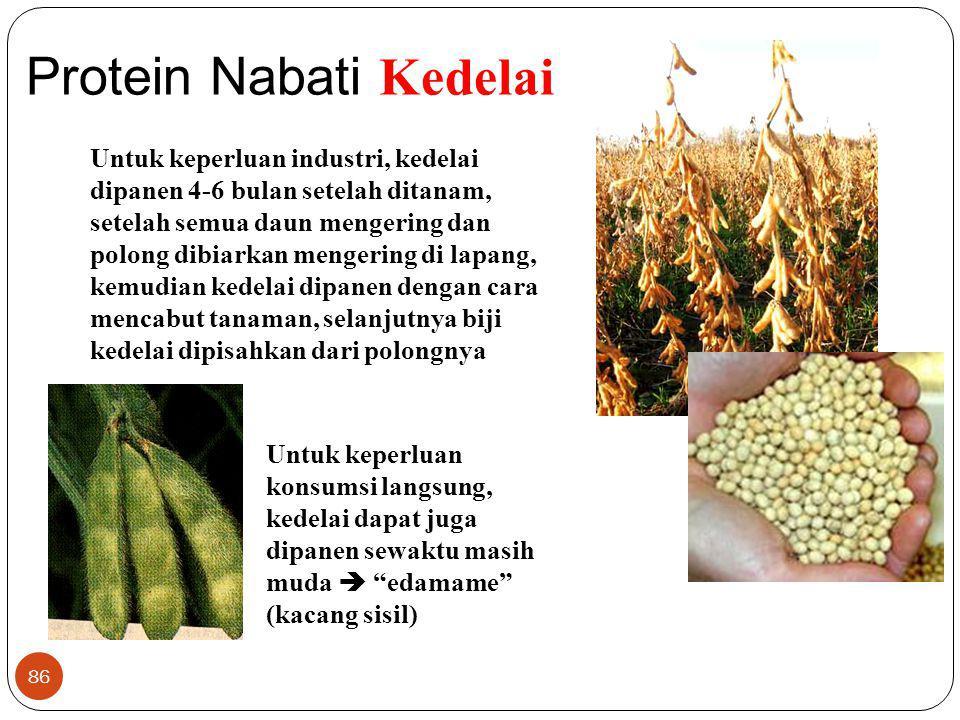 Protein Nabati Kedelai