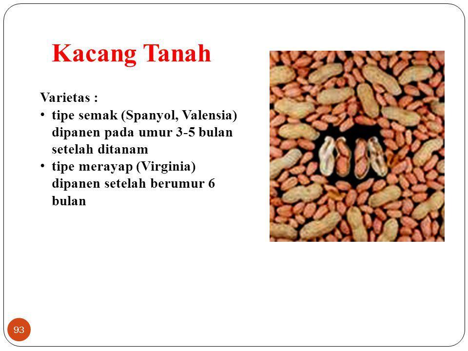 Kacang Tanah Varietas :