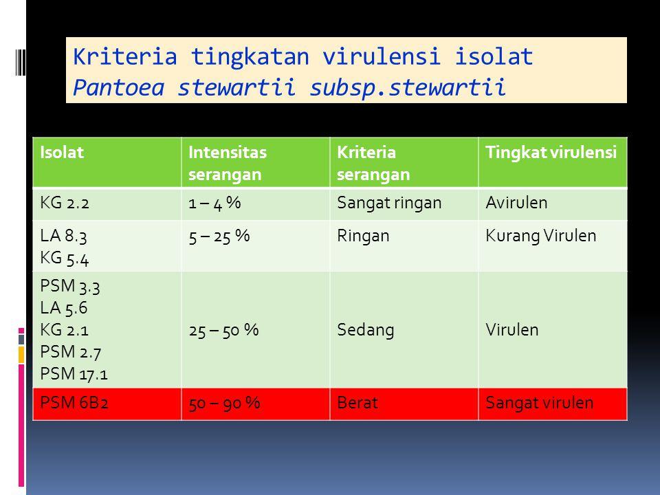 Kriteria tingkatan virulensi isolat Pantoea stewartii subsp.stewartii