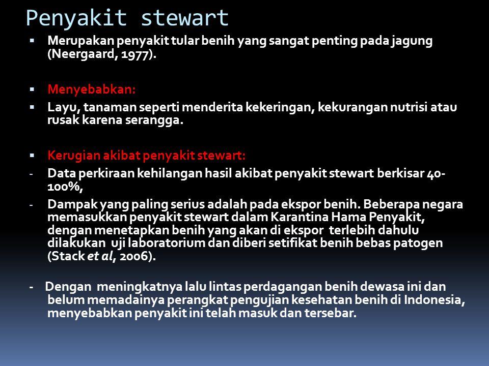 Penyakit stewart Merupakan penyakit tular benih yang sangat penting pada jagung (Neergaard, 1977).