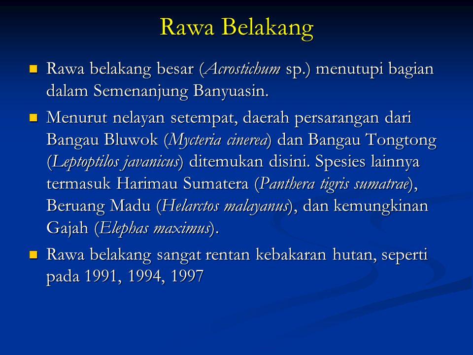 Rawa Belakang Rawa belakang besar (Acrostichum sp.) menutupi bagian dalam Semenanjung Banyuasin.