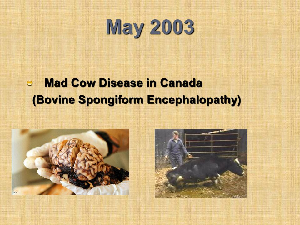 May 2003 Mad Cow Disease in Canada (Bovine Spongiform Encephalopathy)