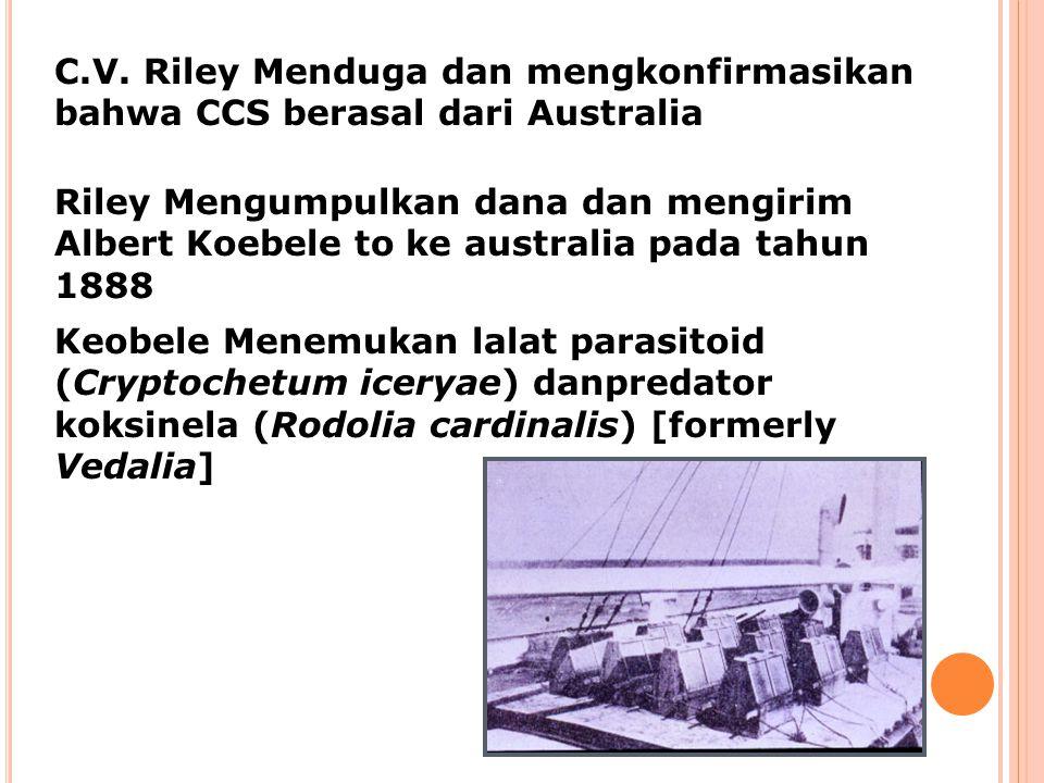 C.V. Riley Menduga dan mengkonfirmasikan bahwa CCS berasal dari Australia