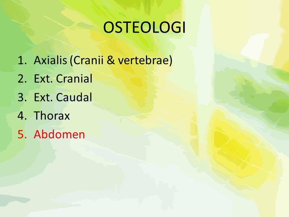 OSTEOLOGI Axialis (Cranii & vertebrae) Ext. Cranial Ext. Caudal Thorax