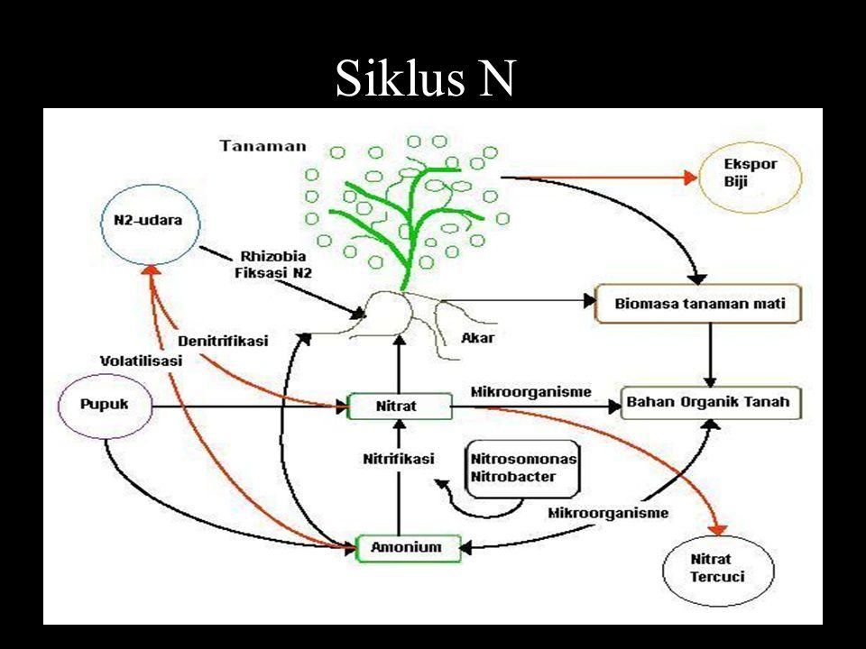 Siklus N