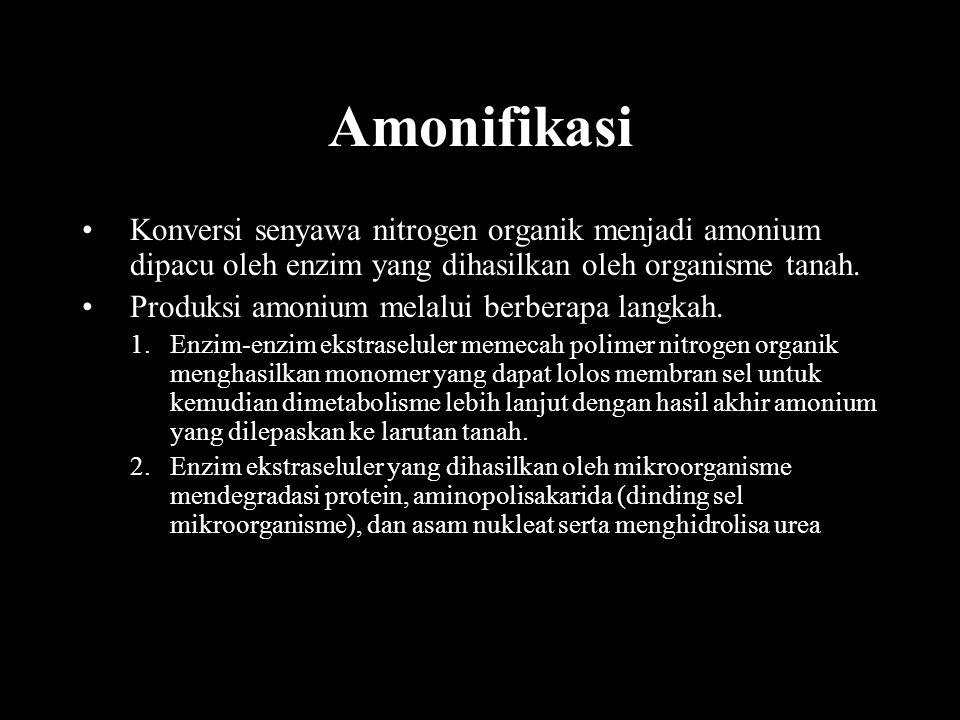 Amonifikasi Konversi senyawa nitrogen organik menjadi amonium dipacu oleh enzim yang dihasilkan oleh organisme tanah.