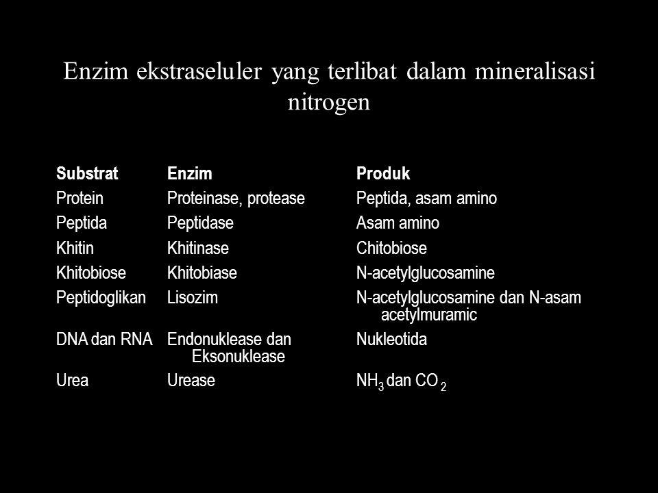 Enzim ekstraseluler yang terlibat dalam mineralisasi nitrogen