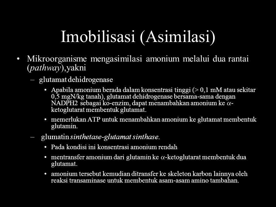 Imobilisasi (Asimilasi)