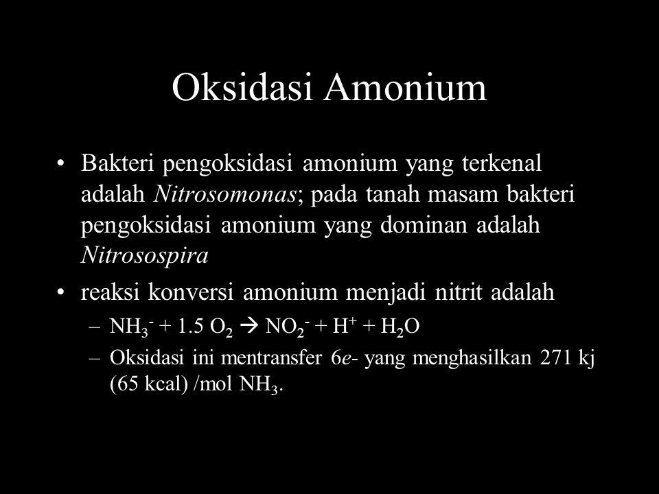 Oksidasi Amonium