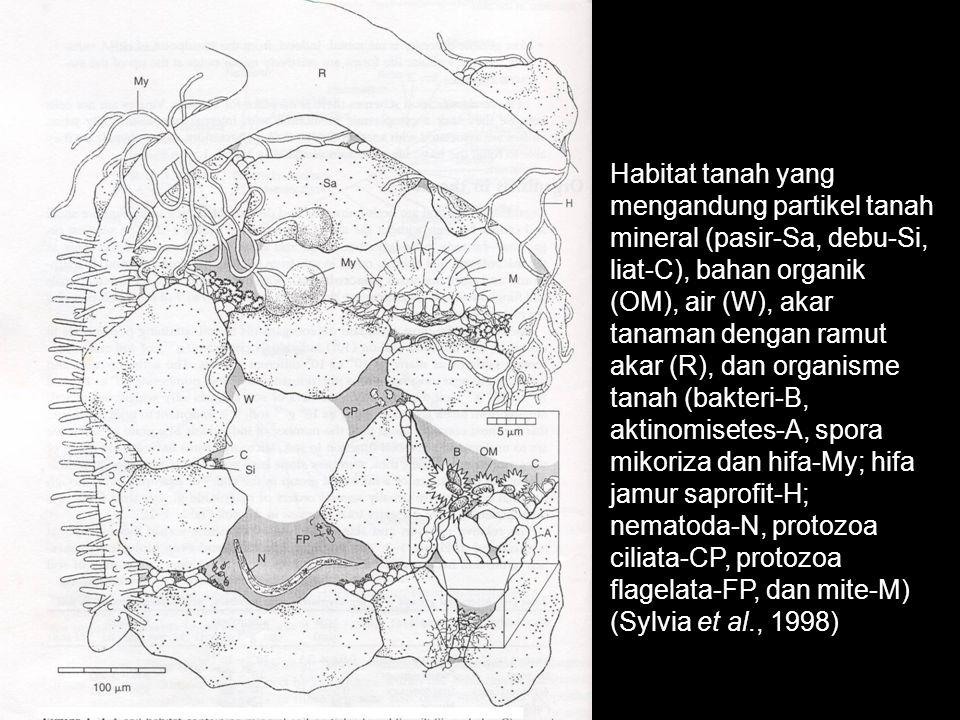 Habitat tanah yang mengandung partikel tanah mineral (pasir-Sa, debu-Si, liat-C), bahan organik (OM), air (W), akar tanaman dengan ramut akar (R), dan organisme tanah (bakteri-B, aktinomisetes-A, spora mikoriza dan hifa-My; hifa jamur saprofit-H; nematoda-N, protozoa ciliata-CP, protozoa flagelata-FP, dan mite-M) (Sylvia et al., 1998)