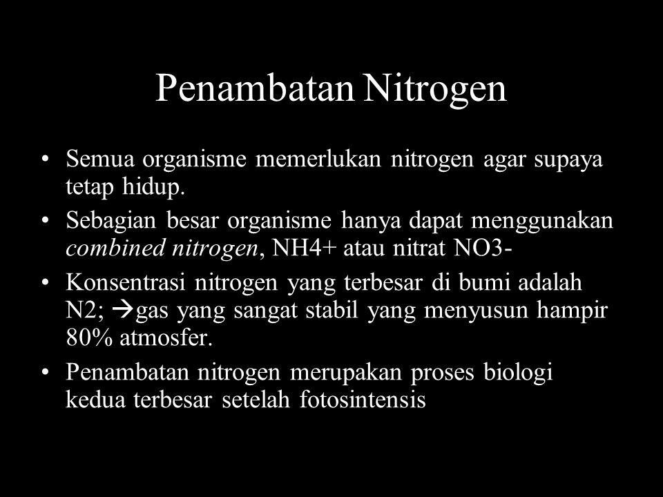 Penambatan Nitrogen Semua organisme memerlukan nitrogen agar supaya tetap hidup.
