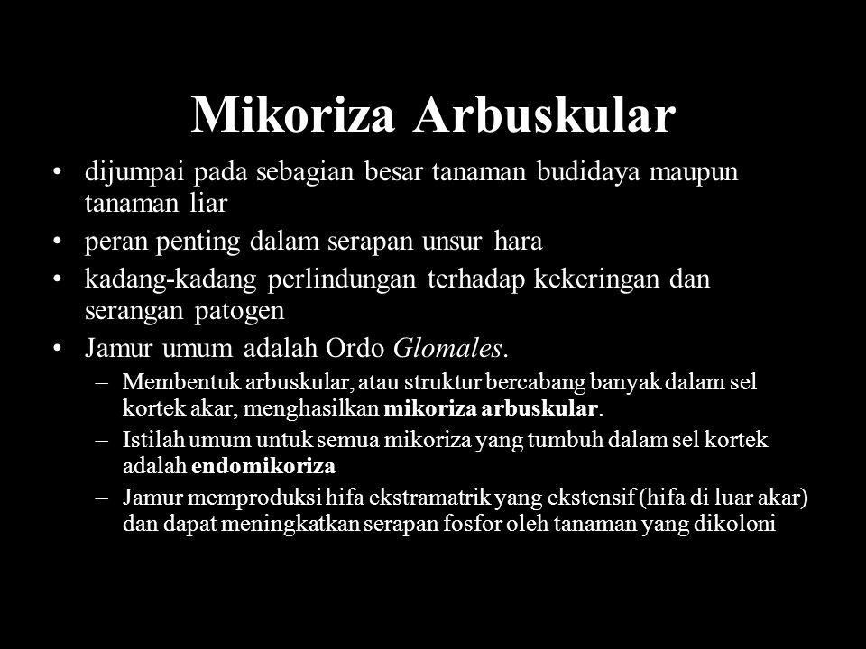 Mikoriza Arbuskular dijumpai pada sebagian besar tanaman budidaya maupun tanaman liar. peran penting dalam serapan unsur hara.