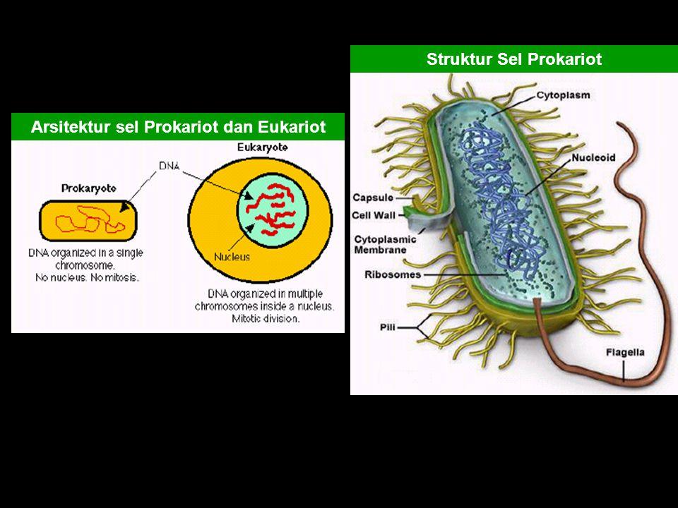 Struktur Sel Prokariot Arsitektur sel Prokariot dan Eukariot