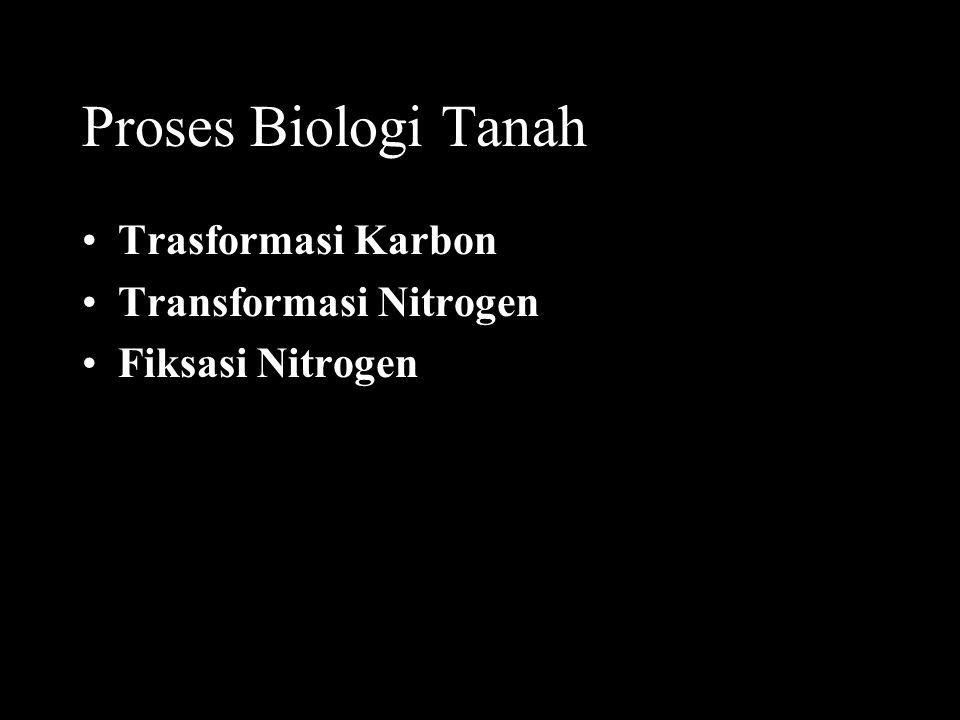 Proses Biologi Tanah Trasformasi Karbon Transformasi Nitrogen