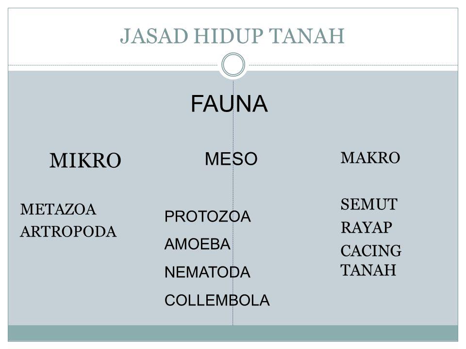 FAUNA JASAD HIDUP TANAH MIKRO MESO MAKRO SEMUT RAYAP CACING TANAH