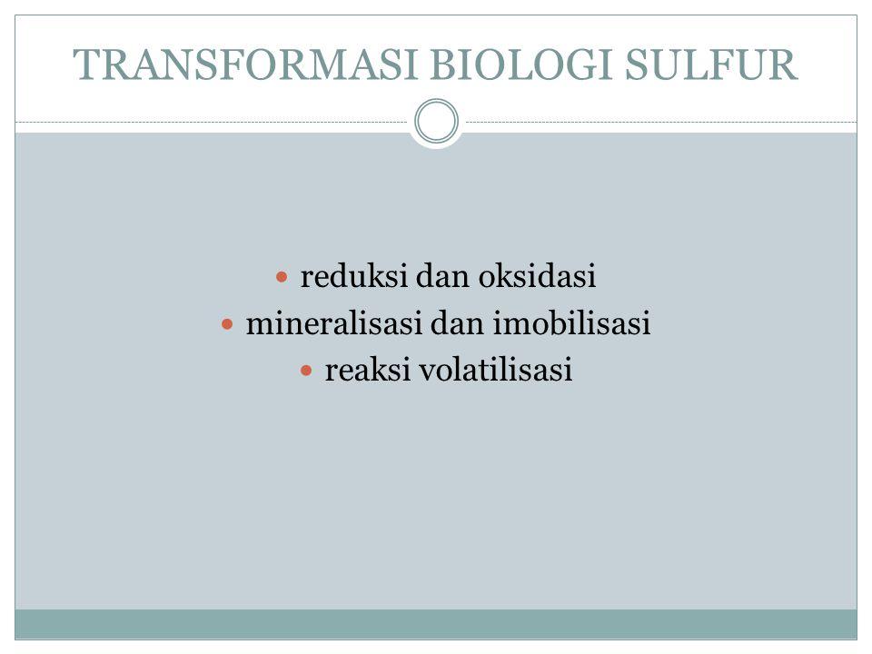 TRANSFORMASI BIOLOGI SULFUR