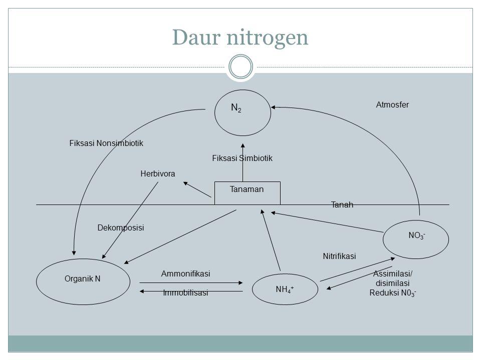 Daur nitrogen N2 Tanaman Herbivora Organik N NH4+ NO3-