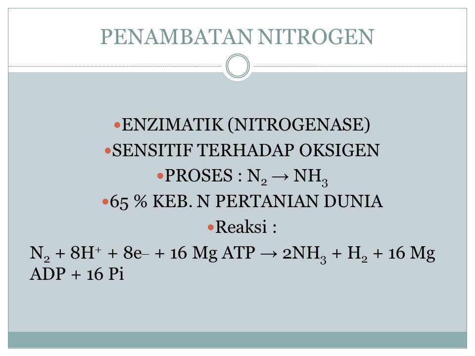 PENAMBATAN NITROGEN ENZIMATIK (NITROGENASE) SENSITIF TERHADAP OKSIGEN