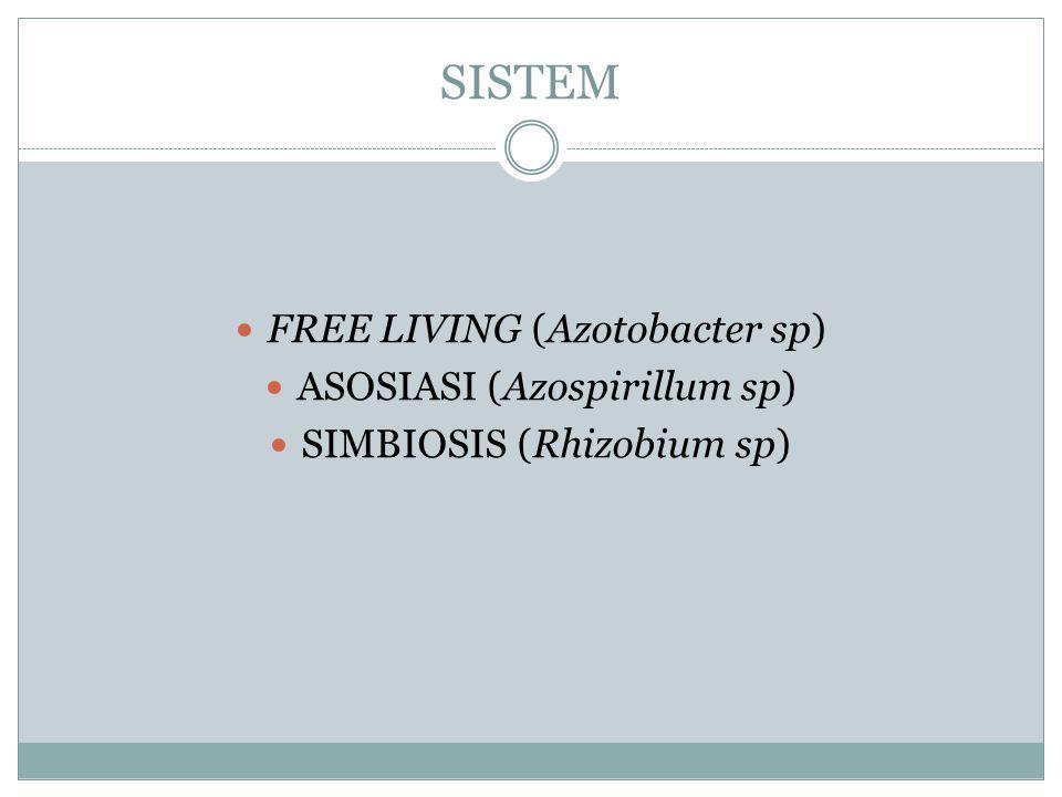SISTEM FREE LIVING (Azotobacter sp) ASOSIASI (Azospirillum sp)
