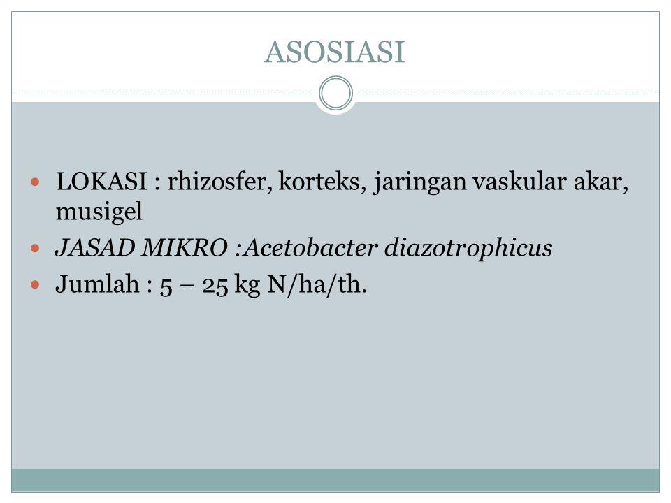 ASOSIASI LOKASI : rhizosfer, korteks, jaringan vaskular akar, musigel
