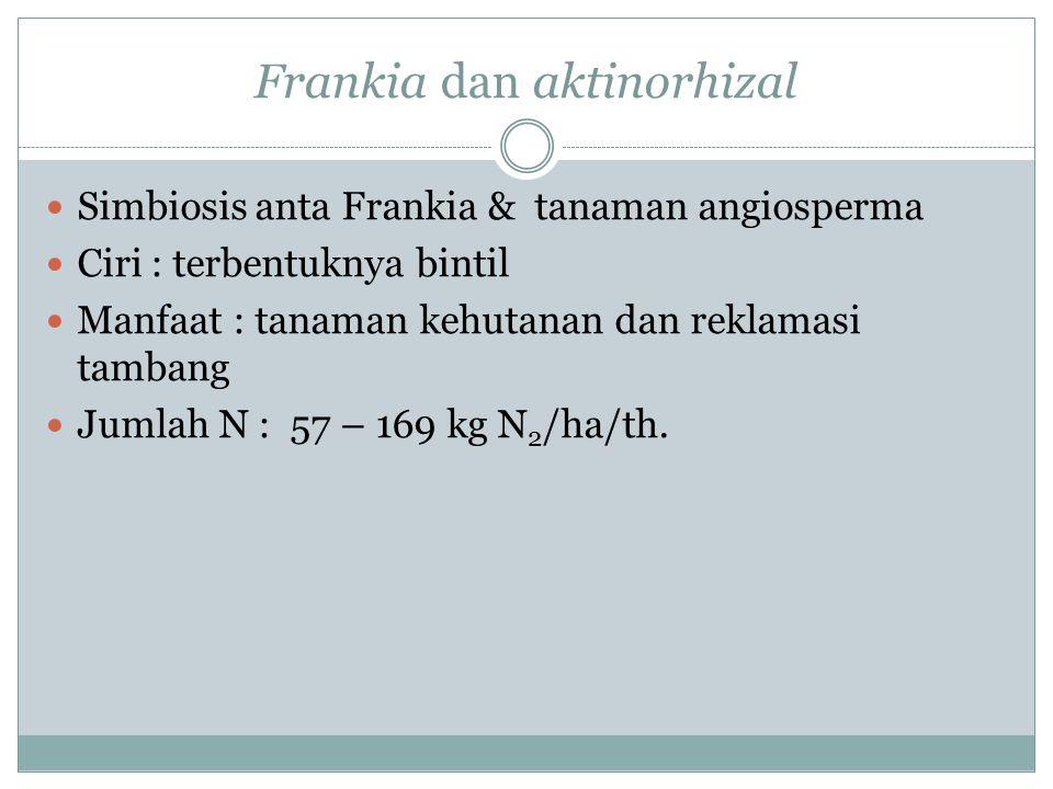 Frankia dan aktinorhizal
