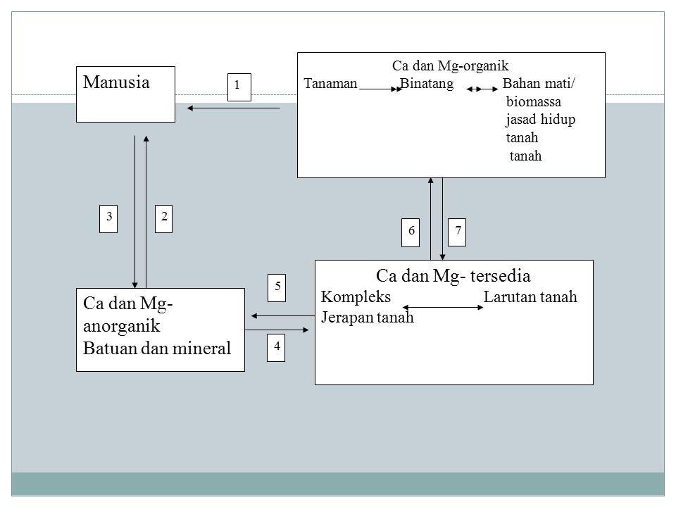 Manusia Ca dan Mg- tersedia Ca dan Mg- anorganik Batuan dan mineral