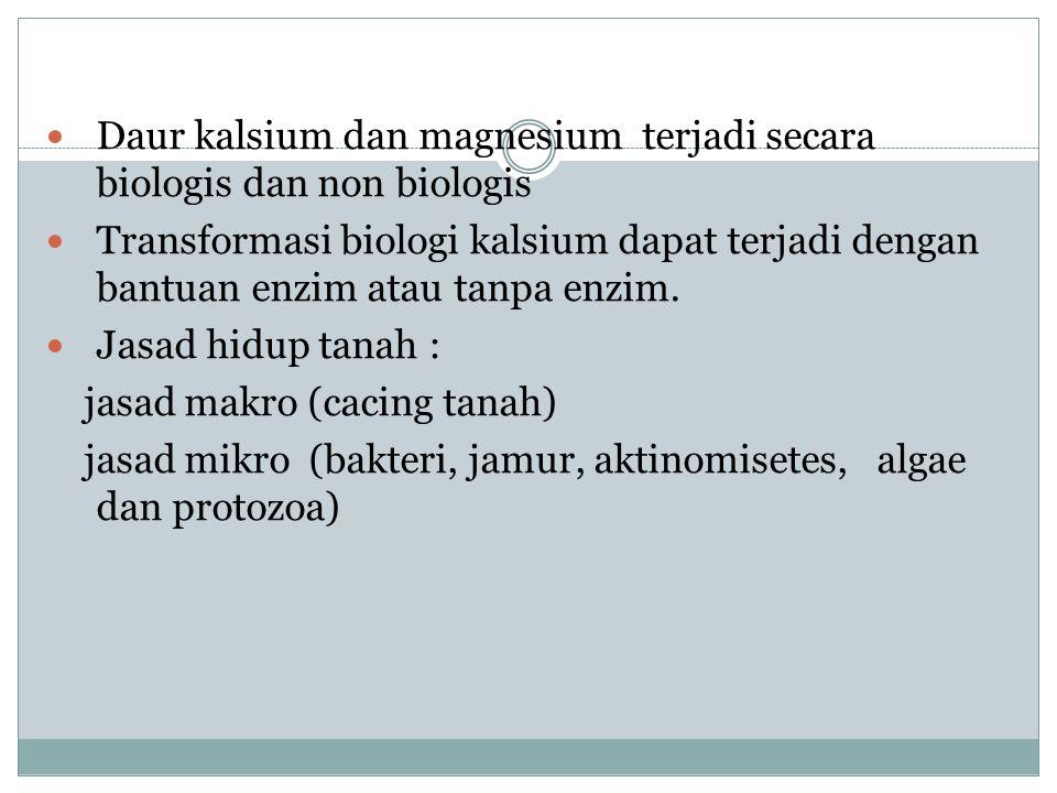 Daur kalsium dan magnesium terjadi secara biologis dan non biologis