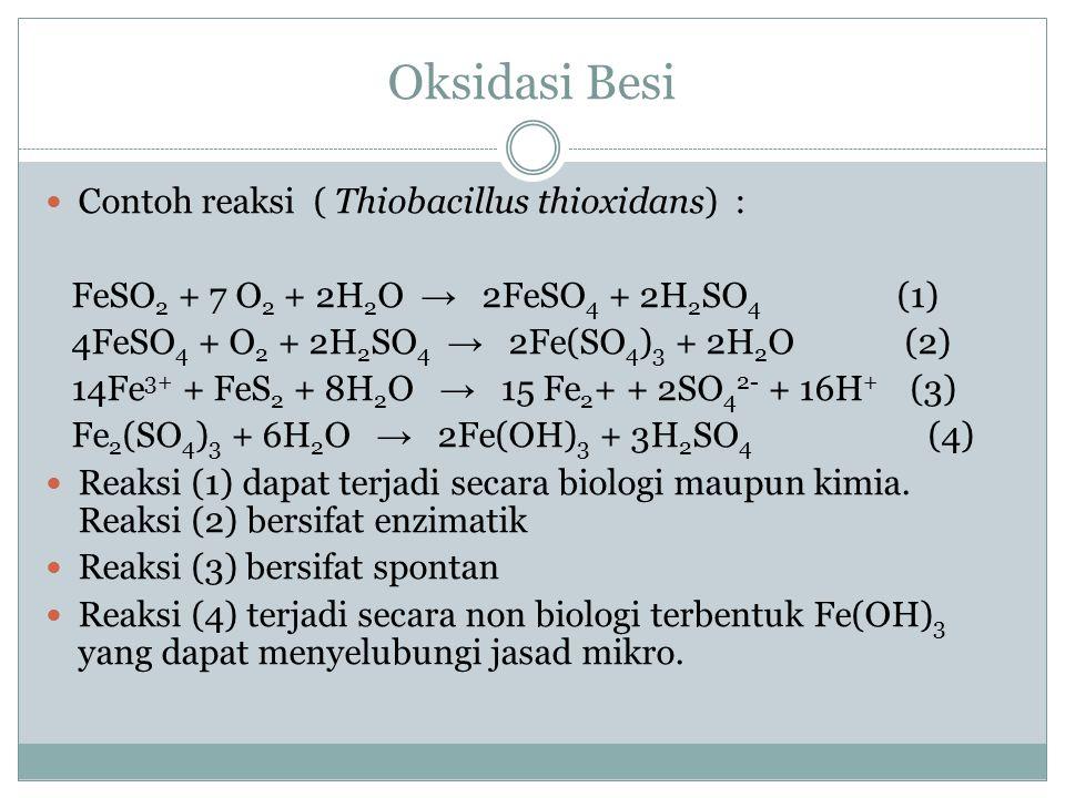 Oksidasi Besi Contoh reaksi ( Thiobacillus thioxidans) :