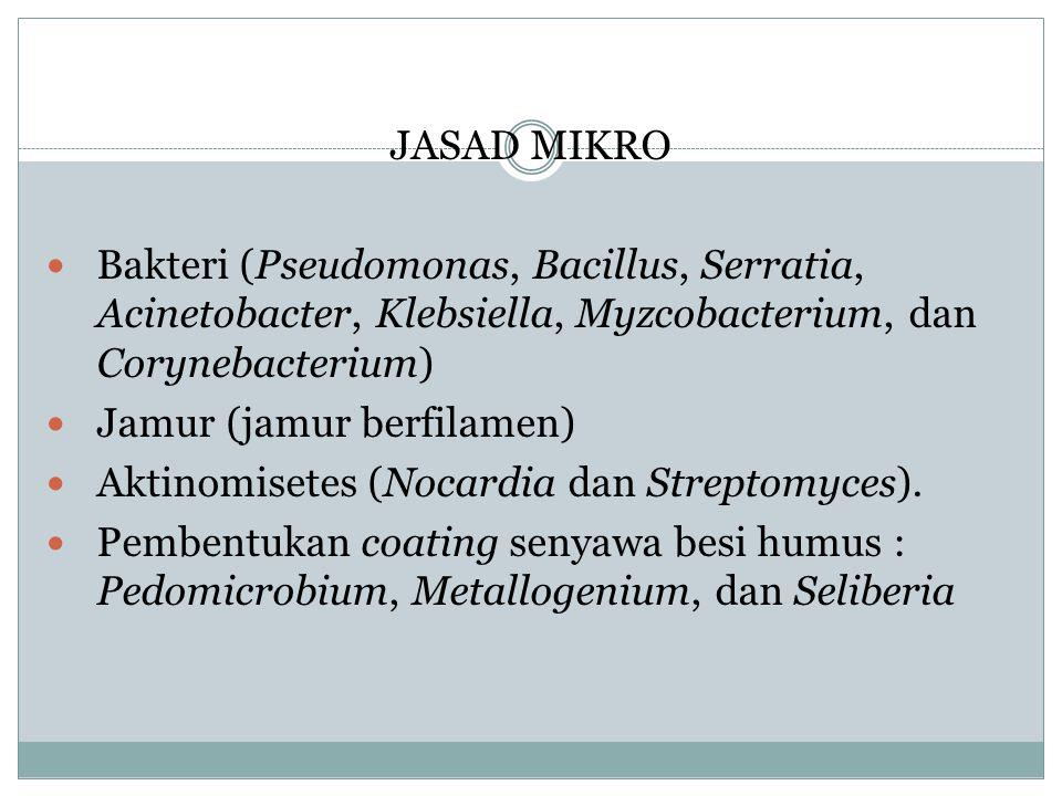 JASAD MIKRO Bakteri (Pseudomonas, Bacillus, Serratia, Acinetobacter, Klebsiella, Myzcobacterium, dan Corynebacterium)