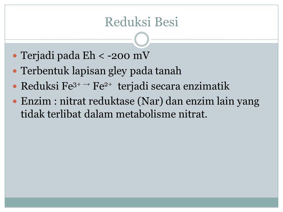 Reduksi Besi Terjadi pada Eh < -200 mV