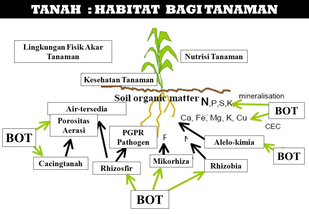 TANAH : HABITAT BAGI TANAMAN Lingkungan Fisik Akar Tanaman