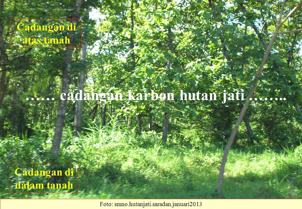 …… cadangan karbon hutan jati …….. Cadangan di dalam tanah