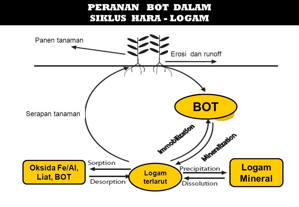 BOT PERANAN BOT DALAM SIKLUS HARA - LOGAM Logam Mineral