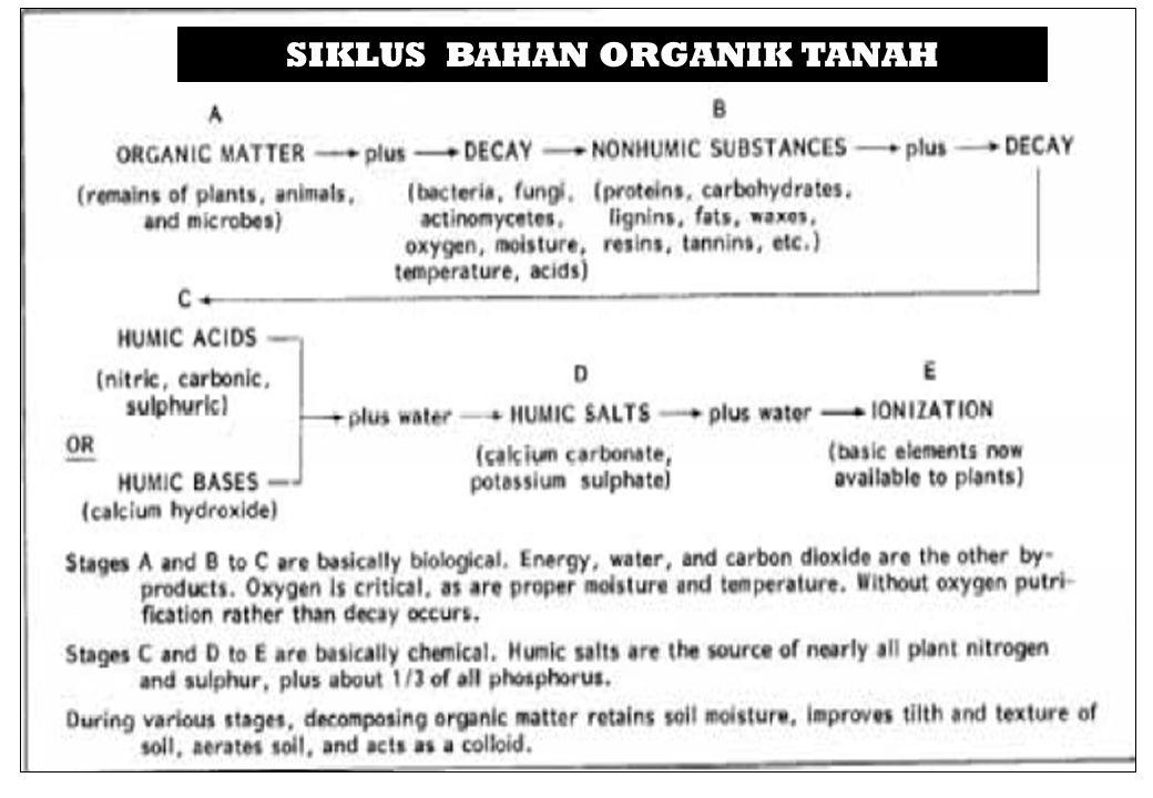 SIKLUS BAHAN ORGANIK TANAH