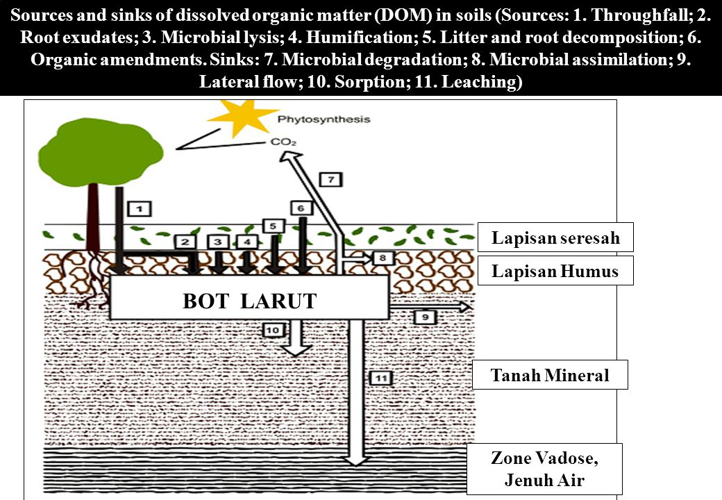 Sources and sinks of dissolved organic matter (DOM) in soils (Sources: 1. Throughfall; 2. Root exudates; 3. Microbial lysis; 4. Humification; 5. Litter and root decomposition; 6. Organic amendments. Sinks: 7. Microbial degradation; 8. Microbial assimilation; 9. Lateral flow; 10. Sorption; 11. Leaching)
