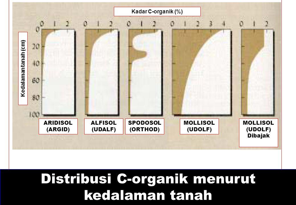 Distribusi C-organik menurut kedalaman tanah