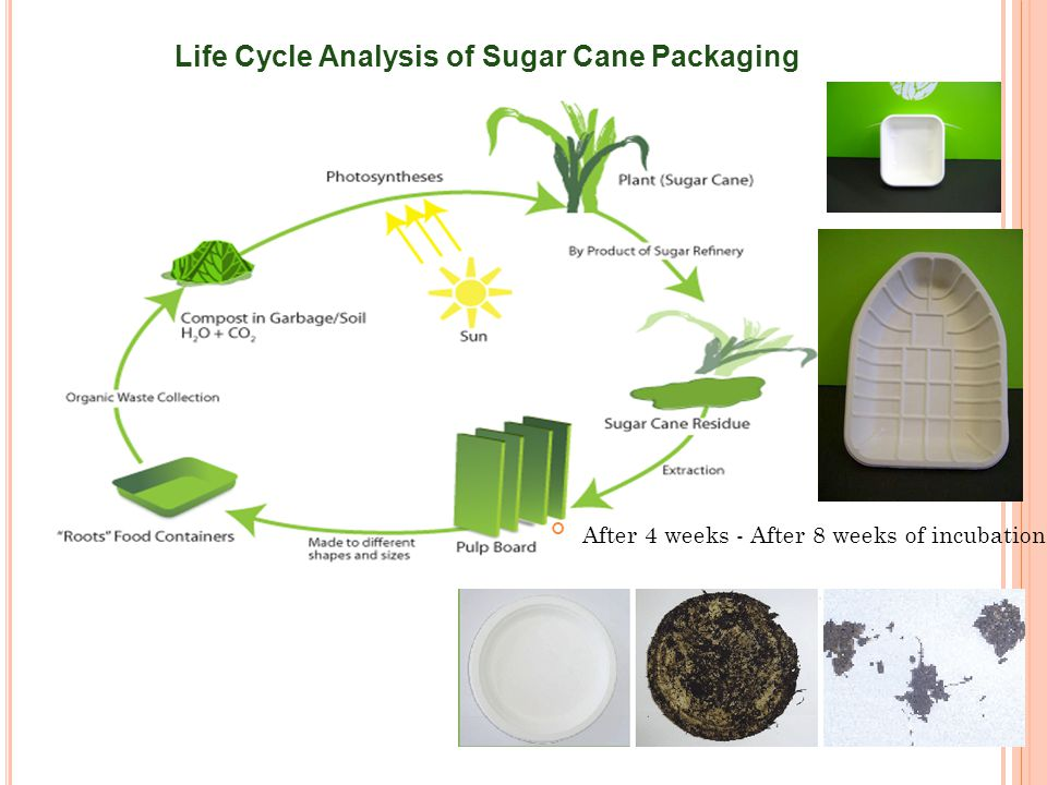 Life Cycle Analysis of Sugar Cane Packaging