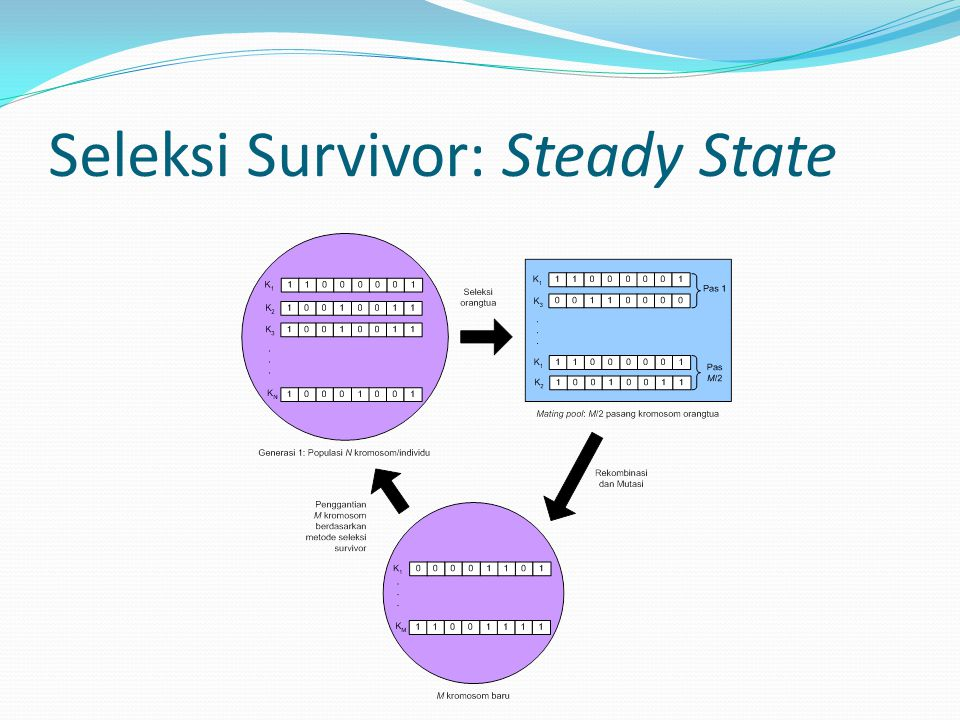 Seleksi Survivor: Steady State