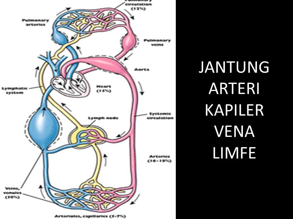 JANTUNG ARTERI KAPILER VENA LIMFE