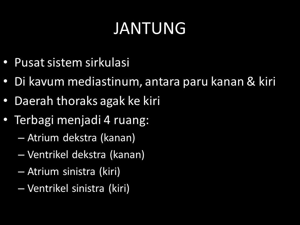 JANTUNG Pusat sistem sirkulasi