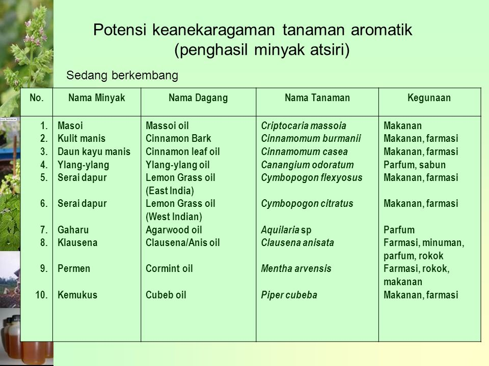 Potensi keanekaragaman tanaman aromatik (penghasil minyak atsiri)