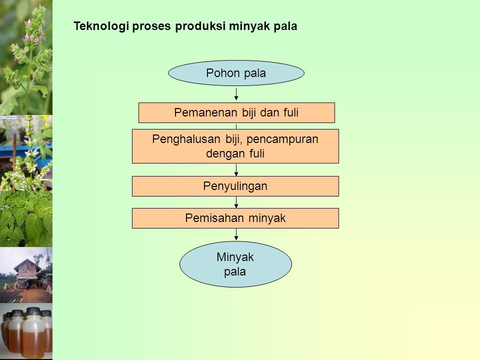 Teknologi proses produksi minyak pala