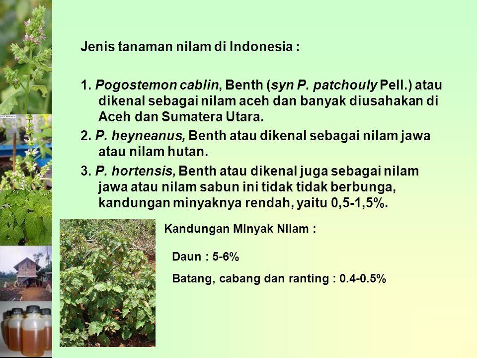 Jenis tanaman nilam di Indonesia :