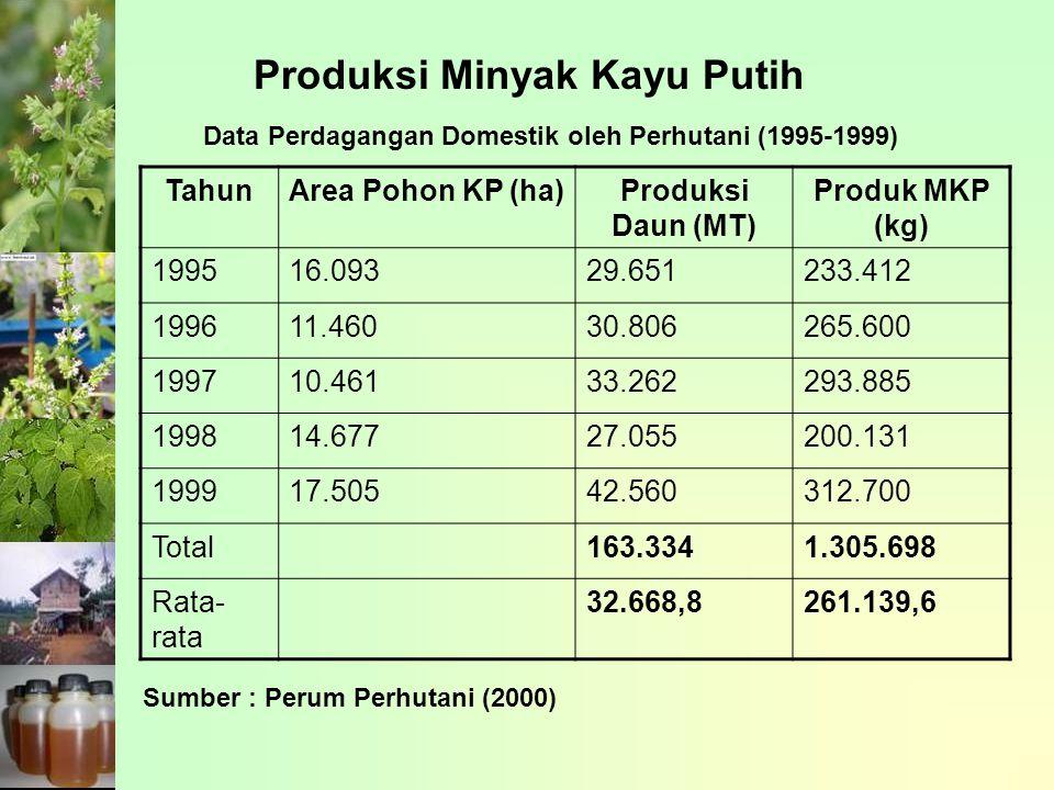 Produksi Minyak Kayu Putih